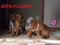 CIMG0355_20100909222348.jpg