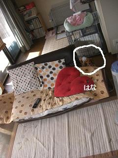 CIMG0360_20100907202440.jpg