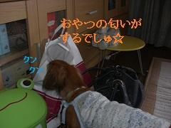 CIMG0364_20100912170409.jpg