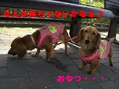 CIMG0365_20100406214834.jpg