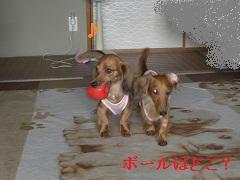 CIMG0377_20100915193755.jpg