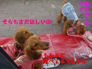 CIMG0378_20100406215951.jpg