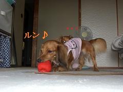 CIMG0381_20100915195120.jpg