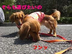 CIMG0396_20100407191042.jpg