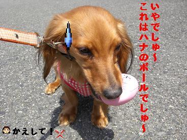 CIMG0398_20100407191449.jpg