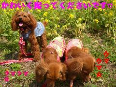 CIMG0408_20100407192055.jpg