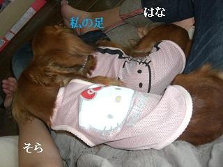 CIMG0408_20100914192652.jpg