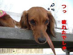 CIMG0413_20100407193405.jpg