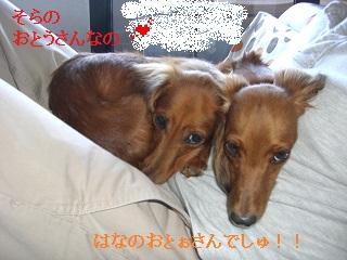 CIMG0417_20100918202426.jpg