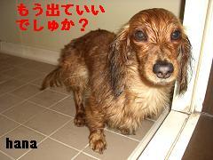 CIMG0425_20100408180248.jpg