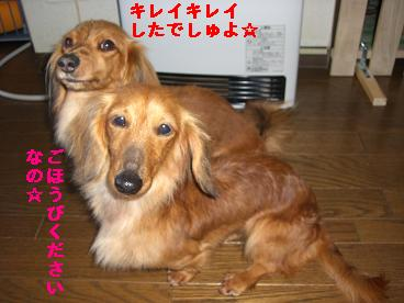 CIMG0426_20100408180443.jpg