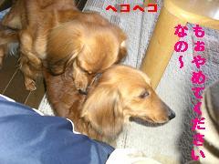 CIMG0428_20100408181223.jpg