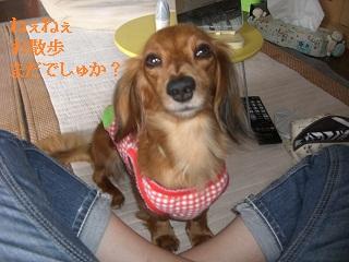 CIMG0438_20100923203906.jpg