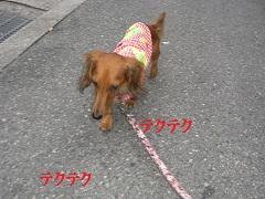 CIMG0442_20100923205911.jpg