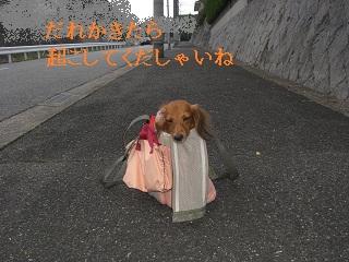 CIMG0446_20100923204929.jpg
