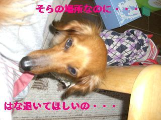 CIMG0453_20100411174142.jpg