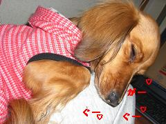 CIMG0456_20100411174030.jpg