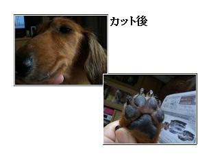 CIMG0456_20100922211604.jpg