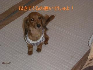 CIMG0460_20101007203930.jpg