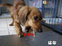 CIMG0462_20100411170800.jpg