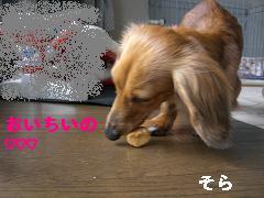 CIMG0463_20100411170818.jpg