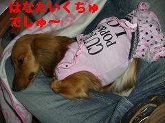CIMG0469_20100412174417.jpg