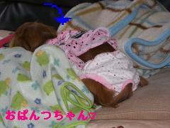 CIMG0470_20100412174432.jpg