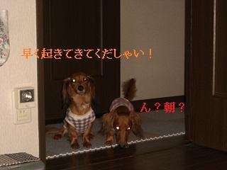 CIMG0470_20101007203854.jpg