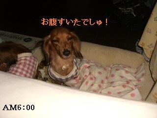 CIMG0472_20101007203838.jpg