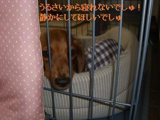CIMG0473_20101007205725.jpg