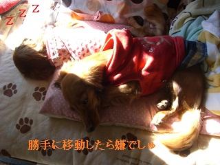 CIMG0500_20101006160319.jpg