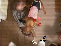 CIMG0509_20101011145638.jpg