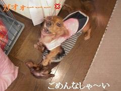 CIMG0511_20101011145654.jpg