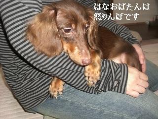 CIMG0527_20101011151327.jpg