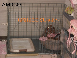 CIMG0544_20101013205918.jpg