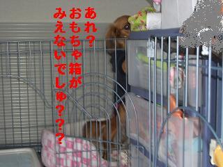 CIMG0549_20100416165220.jpg