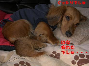 CIMG0558_20100418200111.jpg