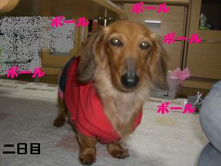 CIMG0559_20100418201500.jpg