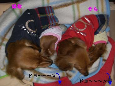 CIMG0567_20100419192334.jpg