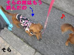 CIMG0569_20100421195955.jpg