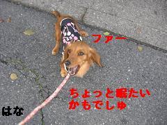 CIMG0571_20100421200036.jpg
