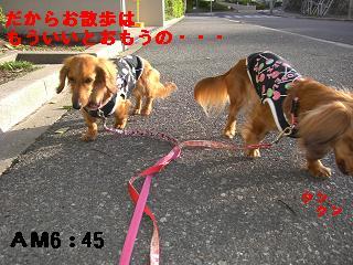 CIMG0573_20100421200402.jpg