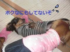 CIMG0589_20101014202858.jpg