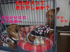 CIMG0598_20100422194152.jpg