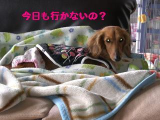 CIMG0604_20100423204017.jpg