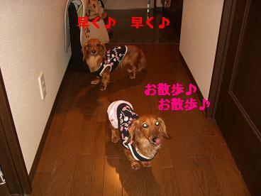 CIMG0606_20100423204242.jpg