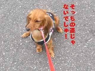 CIMG0609_20100423204611.jpg