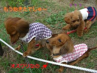CIMG0619_20101018202207.jpg