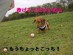 CIMG0624_20100425205525.jpg
