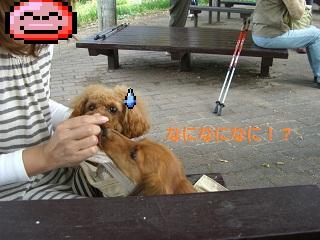 CIMG0636_20101018203420.jpg